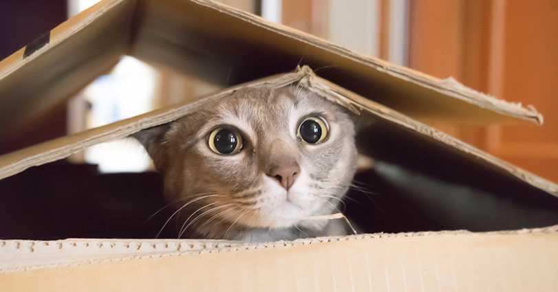 Moving house, cat myths, and what you should do